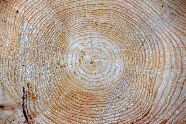 дерево, сруб, лес