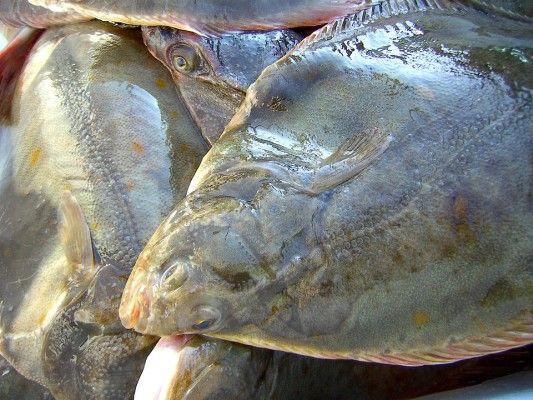Камбала, рыба, море