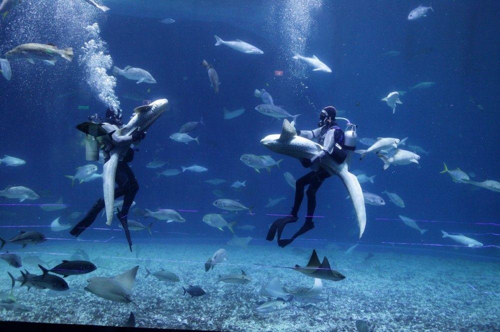 Акулы, скаты, танцы со скатами, фото - пресс-служба Приморского океанариума