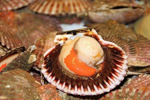 Гребешок, морепродукты. Фото - pixabay