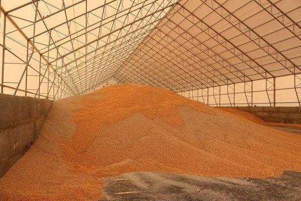Зерно, кукуруза
