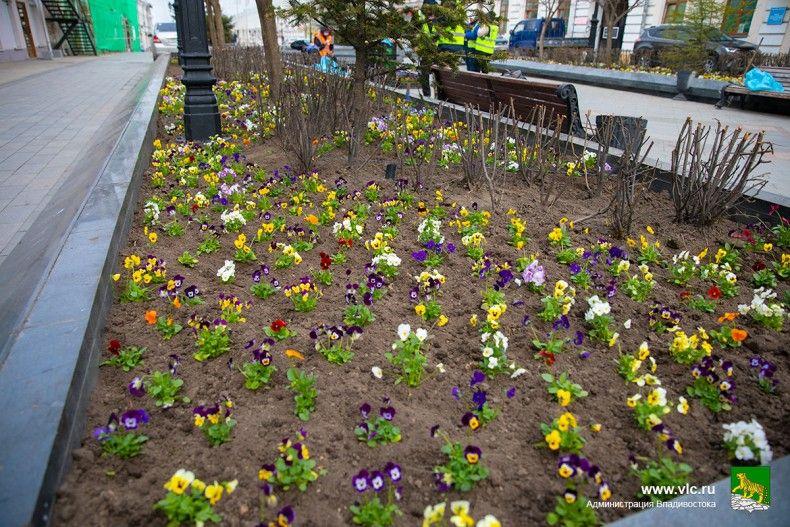 Клумба, цветы, высадка цветов. Фото - Анастасия Котлярова, пресс-служба мэрии Владивостока