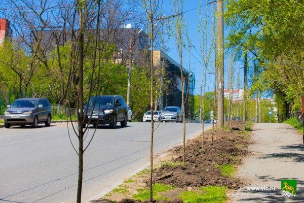 Пирамидальные тополя. Высадка деревьев на Русской. Фото - Анастасия Котлярова