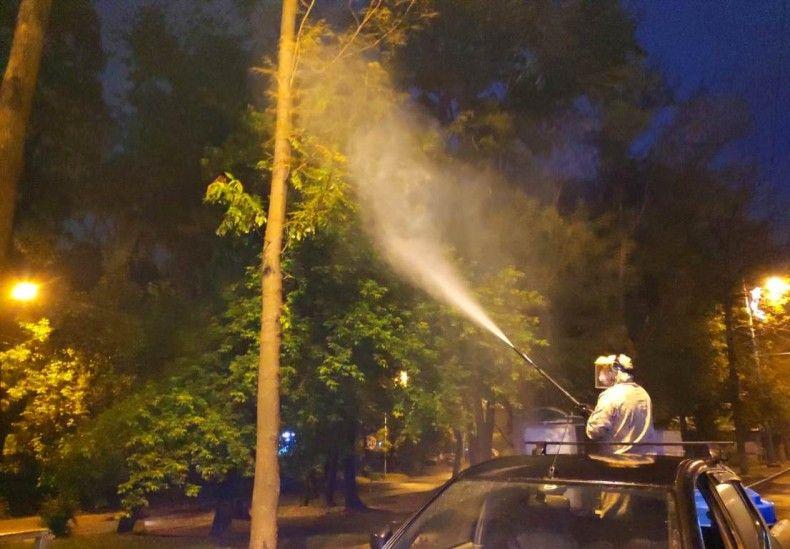 Обработка деревьев от гусениц. Фото - управление дорог и благоустройства администрации г. Владивостока