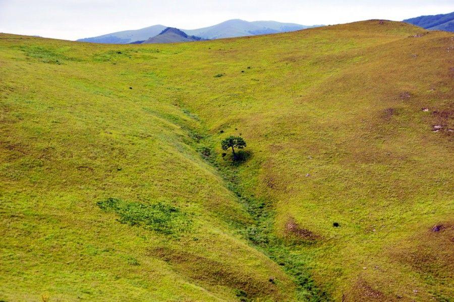 Исчезнувший лес у полуострова Гамова, кластер «Гамовский», Земля леопарда. Фото - пресс-служба ФГБУ «Земля леопарда»