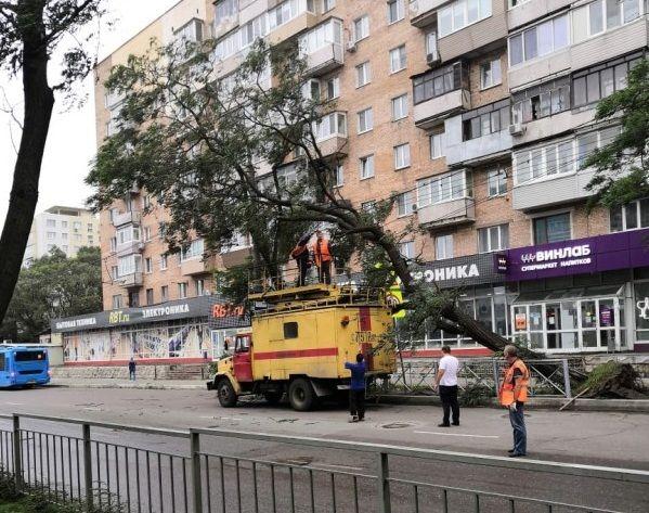 Дерево упало на контактные сети троллейбуса
