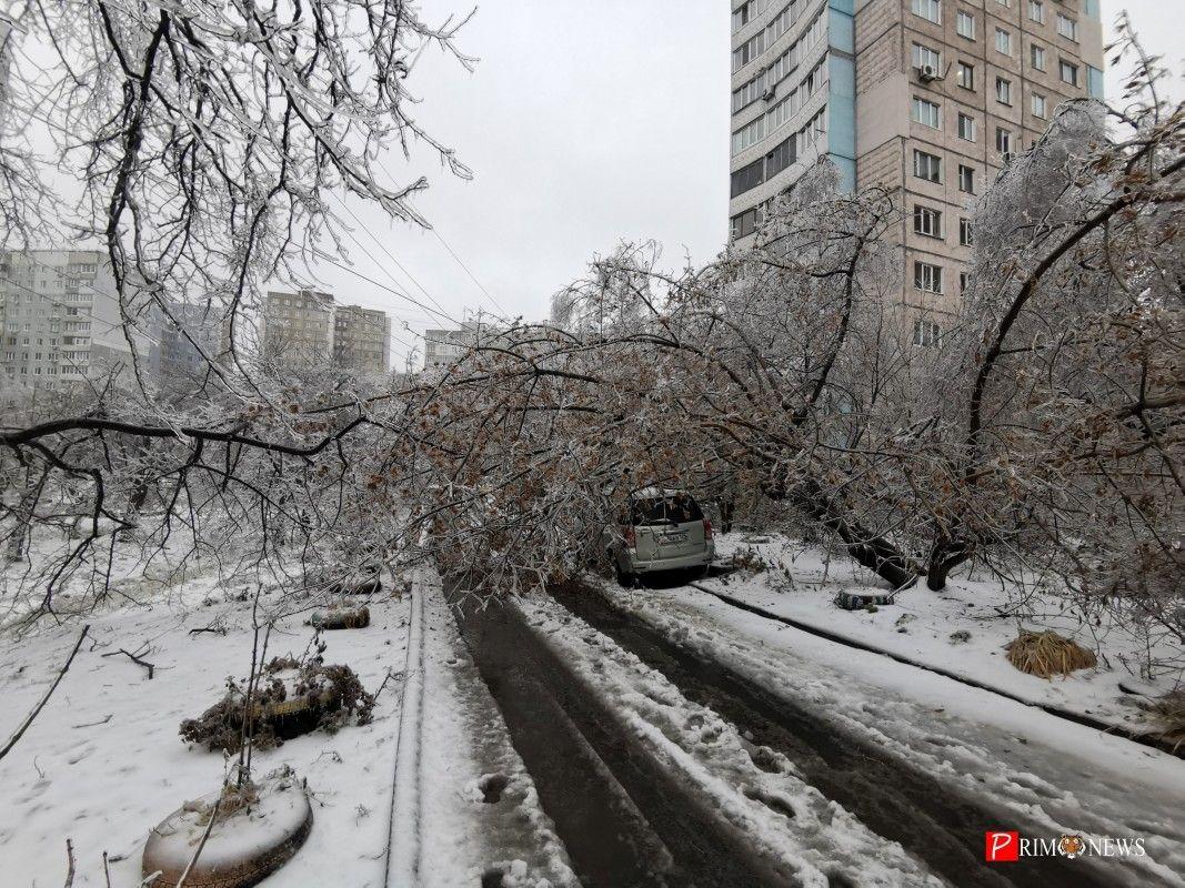 Обледенелое дерево рухнуло на дорогу, дерево упало на машину, снег, гололед, зима. Фото - Prim.News