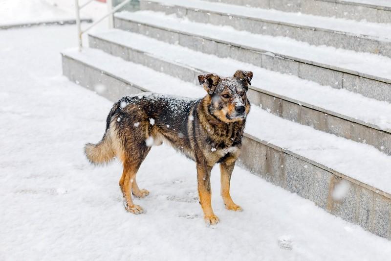 Собака, бездомная собака